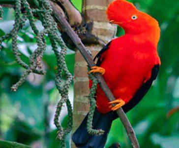 Amazonas Manu 3 dias